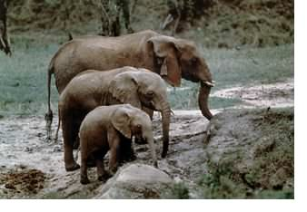 Elephant Sounds, Bag End Infrasub-18 Subwoofer